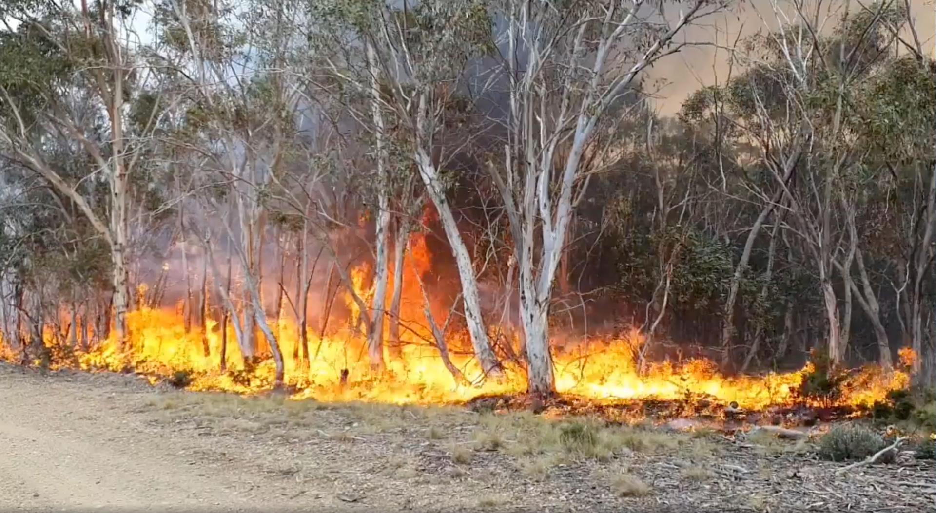 تجدد الحرائق في أستراليا
