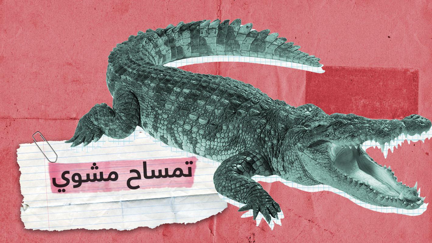 شاهد.. شباب سعوديون يشوون ويأكلون تمساحا