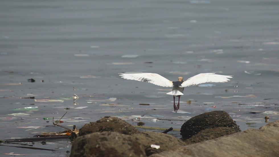 70% من نفايات بحر بارنتس بلاستيكية