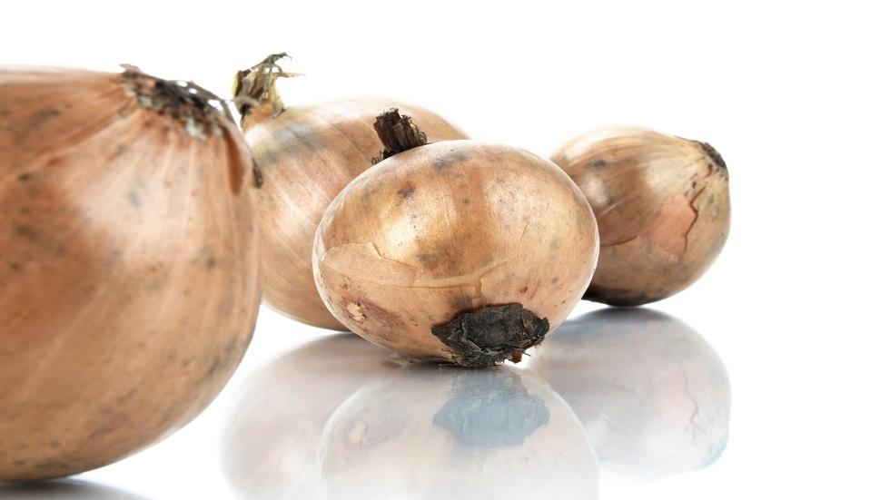 ما خطورة البصل المتعفن على الصحة؟