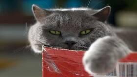 دراسة صادمة .. قطتك قد تلتهم جسدك بعد موتك!