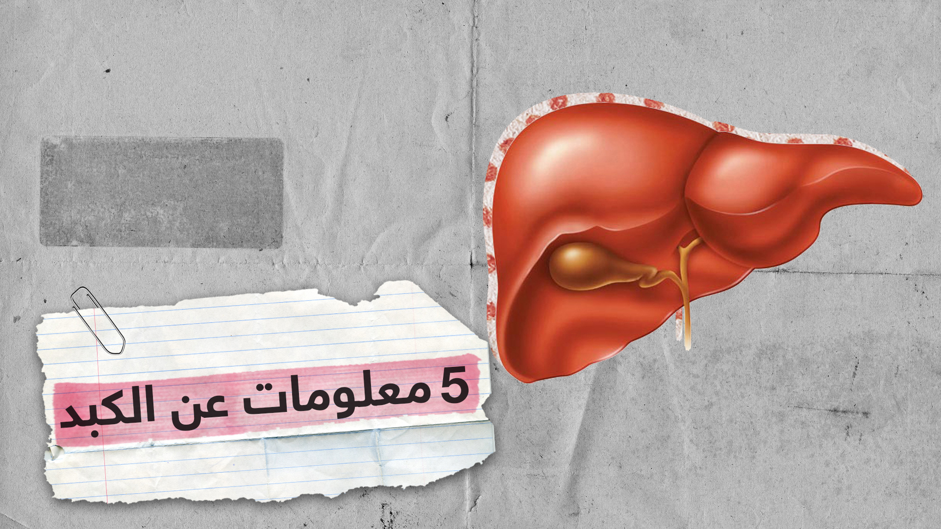 5 حقائق مذهلة لا تعرفها عن الكبد