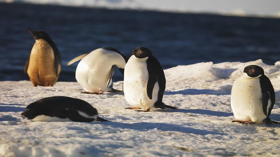 تأثير ارتفاع درجات الحرارة في القارة القطبية الجنوبية