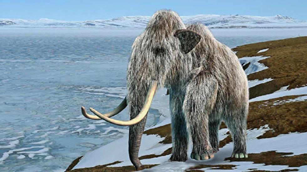 اكتشاف سبب انقراض الماموث