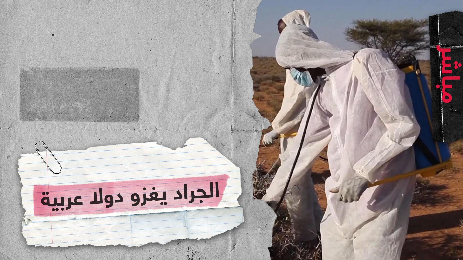 أسوأ هجوم للجراد منذ عشرات السنين يطال دولا عربية