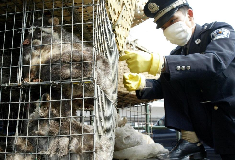 حيوانات برية داخل قفص في الصين -أرشيف-