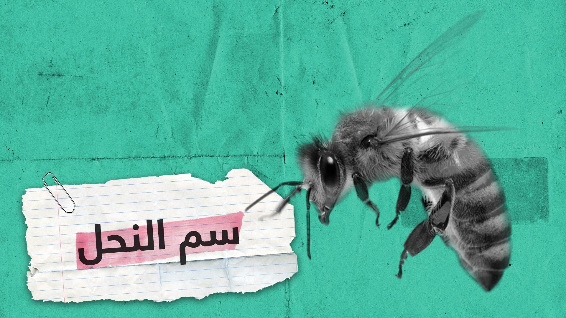 سم النحل.. يمكنه أن يقضي على السرطان والإيدز ولكنه قد يصبح قاتلا
