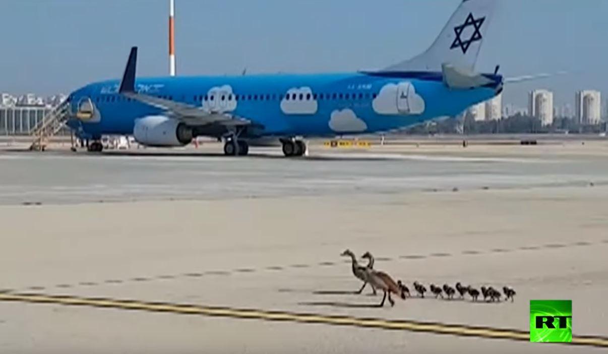 وزّات مصريات تقتحم مطار بن غوريون