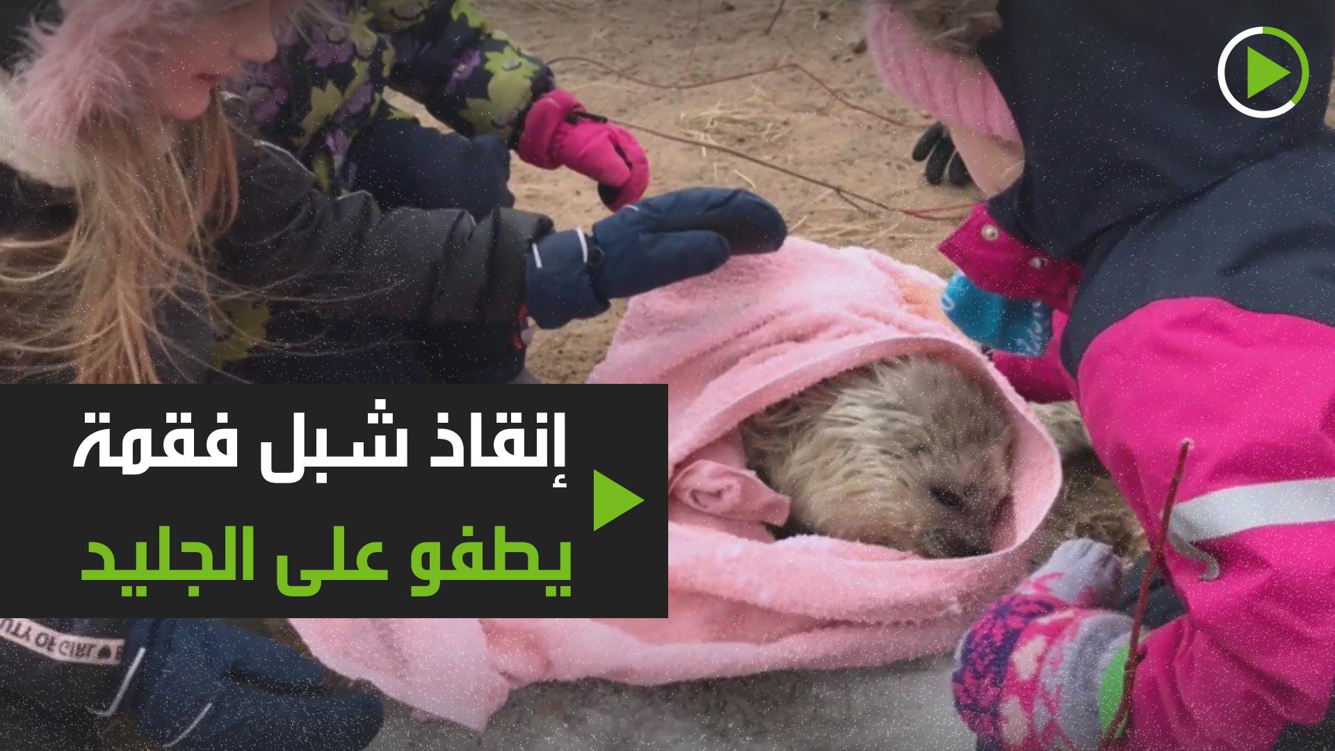 إنقاذ شبل فقمة بحر البلطيق في سان بطرسبورغ