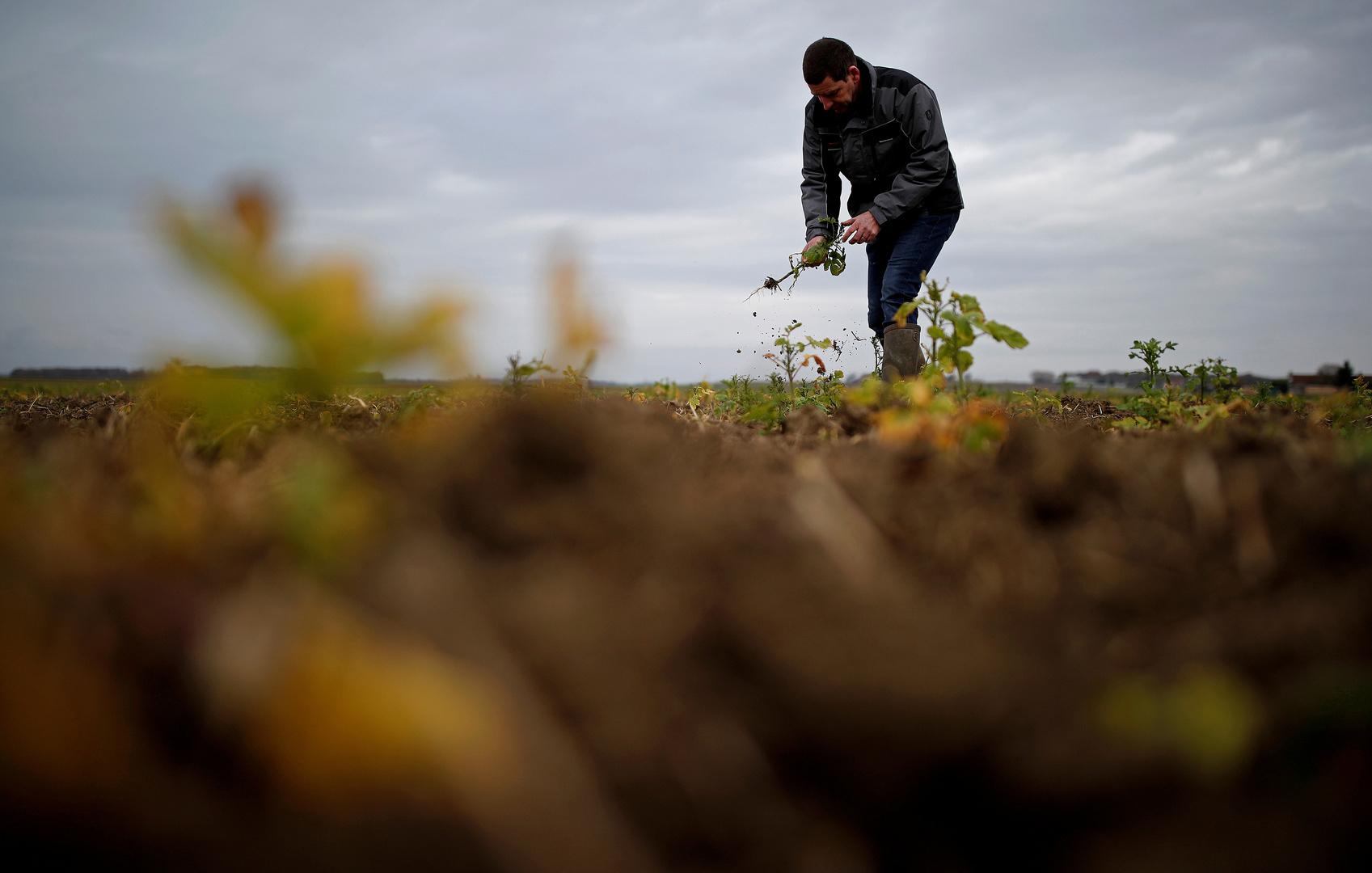 وزير الزراعة الفرنسي: التحقوا بالحقول اليوم قبل غد!