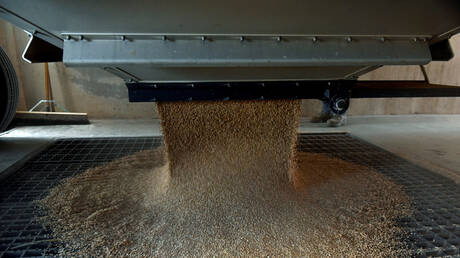 وزارة الزراعة السعودية: الاحتياطي الاستراتيجي من القمح يتجاوز مليون طن