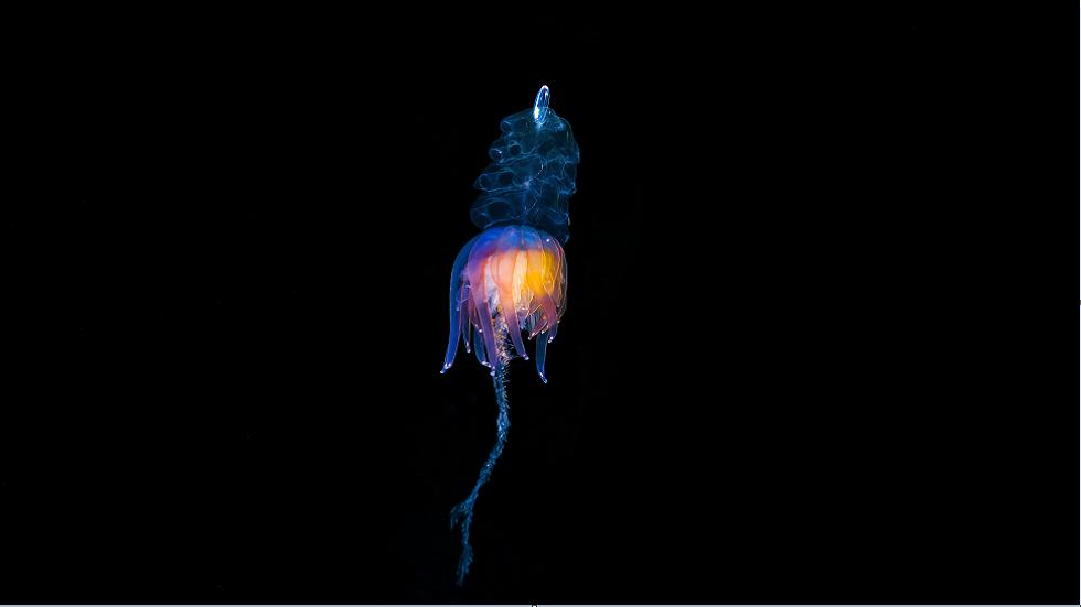 مخلوق غامض يطفو في المحيط يثير شعورا لدى الناس بأنه