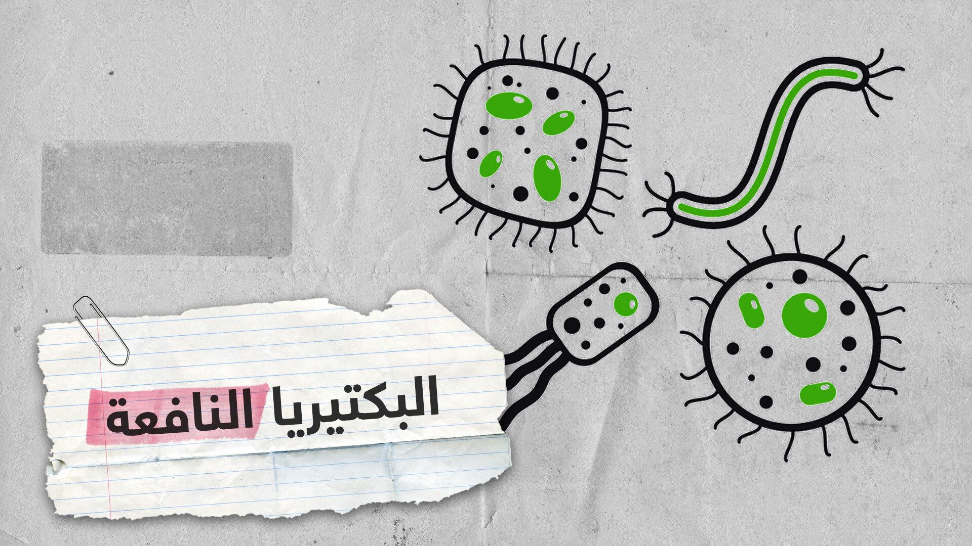أهمية البكتيريا النافعة للجسم