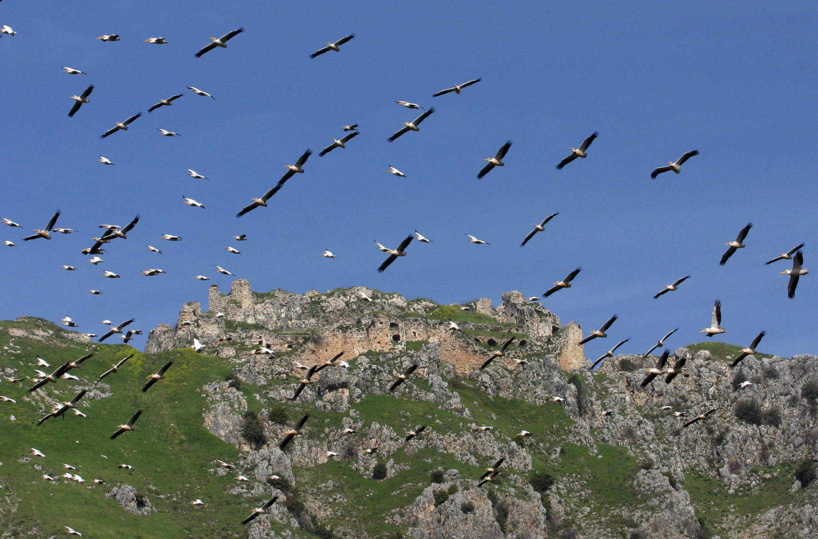 طيور في سماء جنوب لبنان