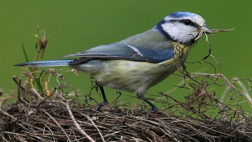 مرض غامض يؤدي إلى نفوق آلاف الطيور في ألمانيا