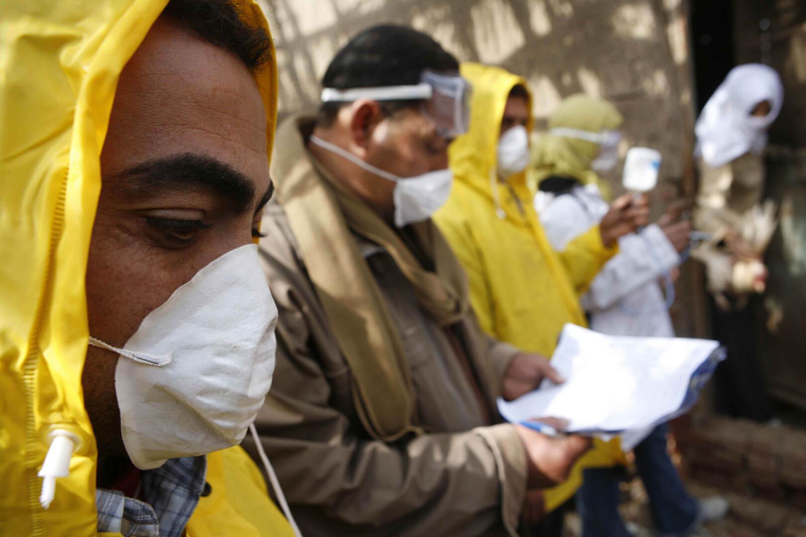 مصر تحقق أكثر من 97% من احتياجاتها من الدواجن