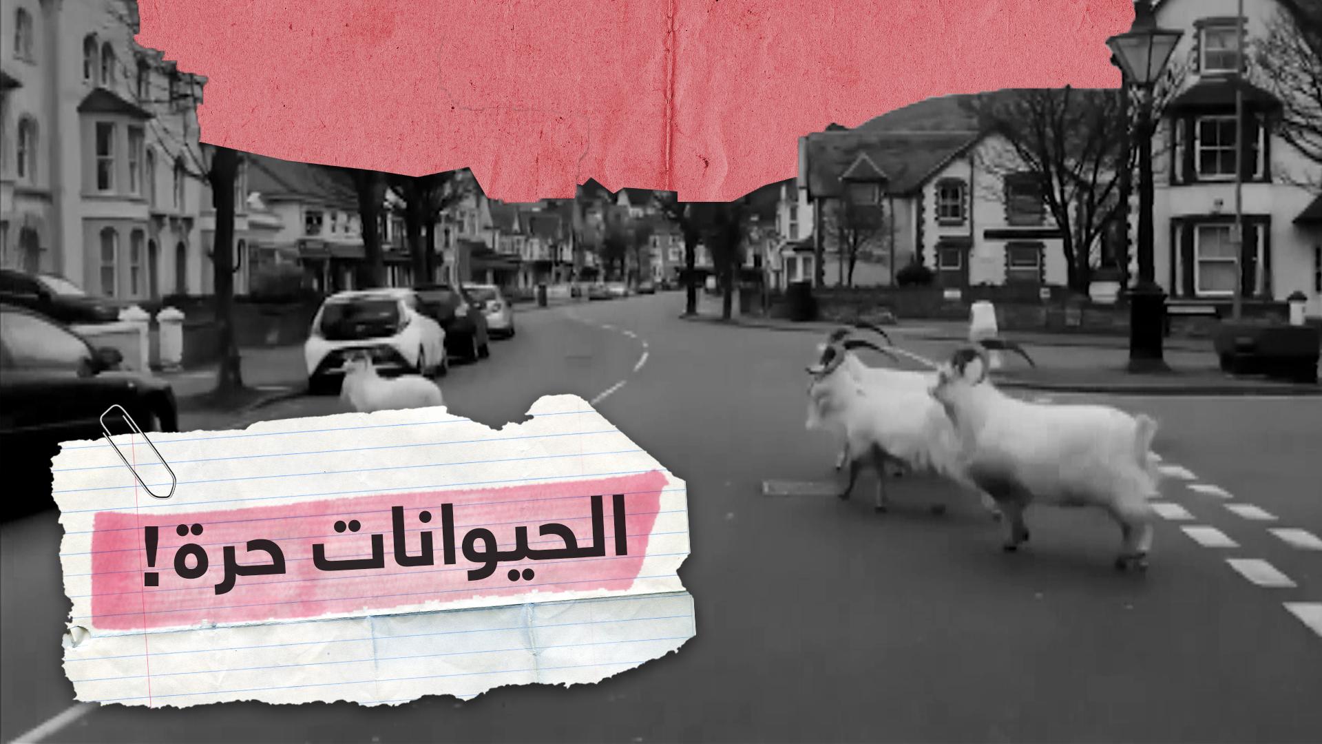ظهور الحيوانات في مشاهد غير مألوفة في بيئتها الأصلية والشوارع