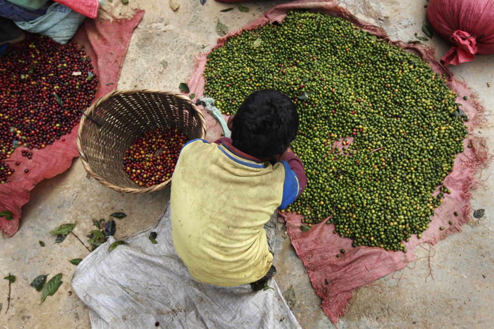 تحذيرات أممية من زيادة الجوع والفقر في أمريكا اللاتينية جراء وباء كورونا