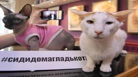بيطري روسي بارز: هل هناك حيوانات مهددة بفيروس كورونا؟