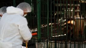 وزير الإعلام المصري يكشف مصدر تفشي فيروس كورونا في البلاد