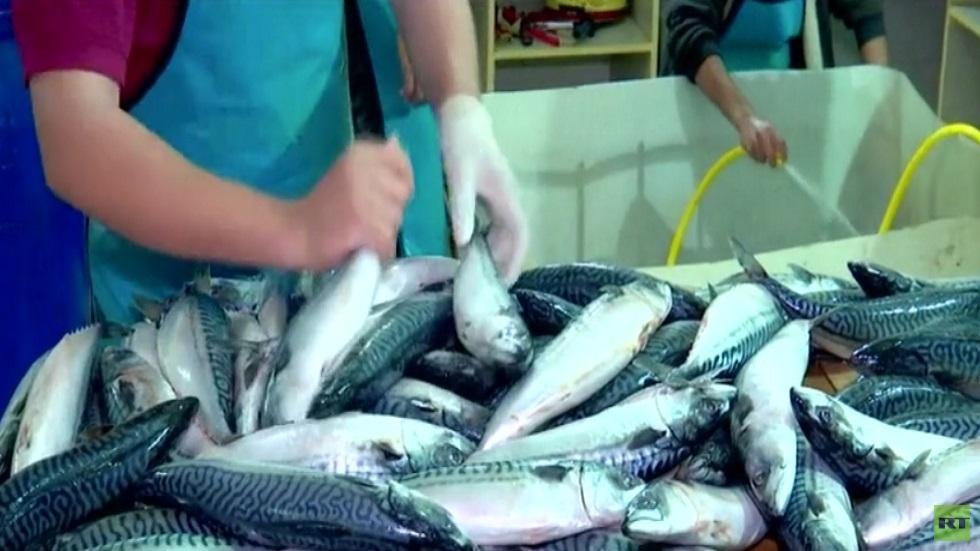 صناعة الفسيخ ... توفر مئات فرص العمل في غزة