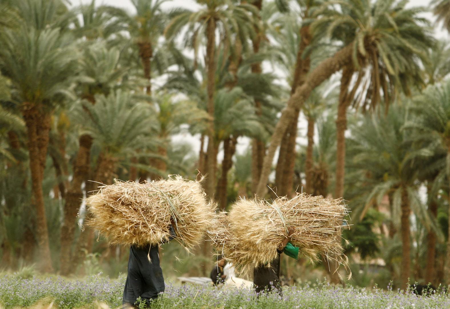 مصر تعلن تصدير نوعية منتجات زراعية إلى دولتين لأول مرة
