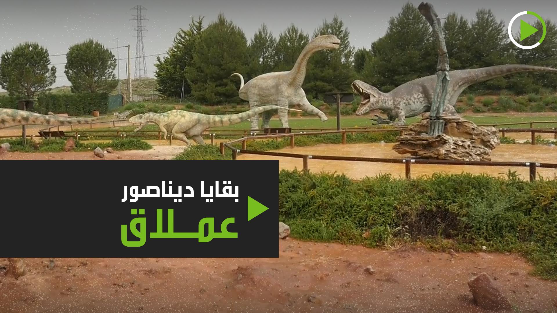 اكتشاف أحفورة تعود لديناصور طوله 20 مترا