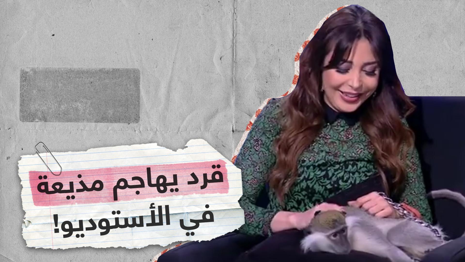 قرد مدرب يهاجم مذيعة مصرية في الأستوديو