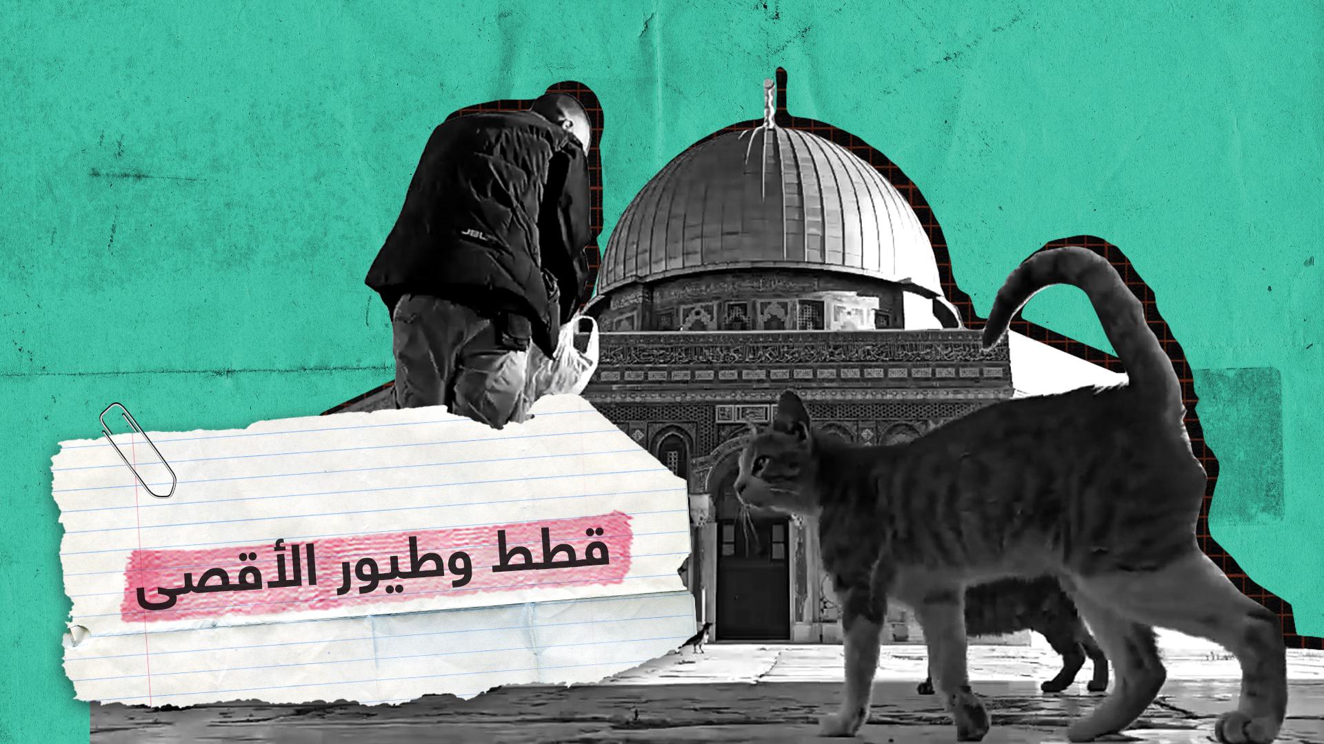 أحد حراس المسجد الأقصى يطعم القطط والطيور أمام قبة الصخرة
