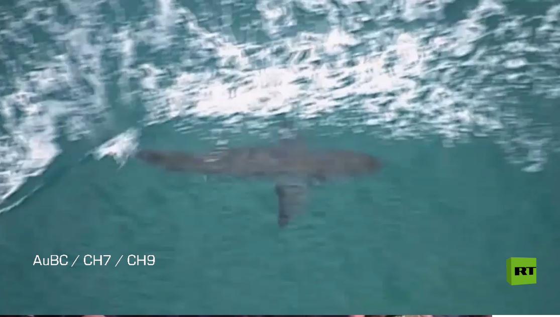 بالفيديو.. سمكة قرش تقتل راكب أمواج في أستراليا