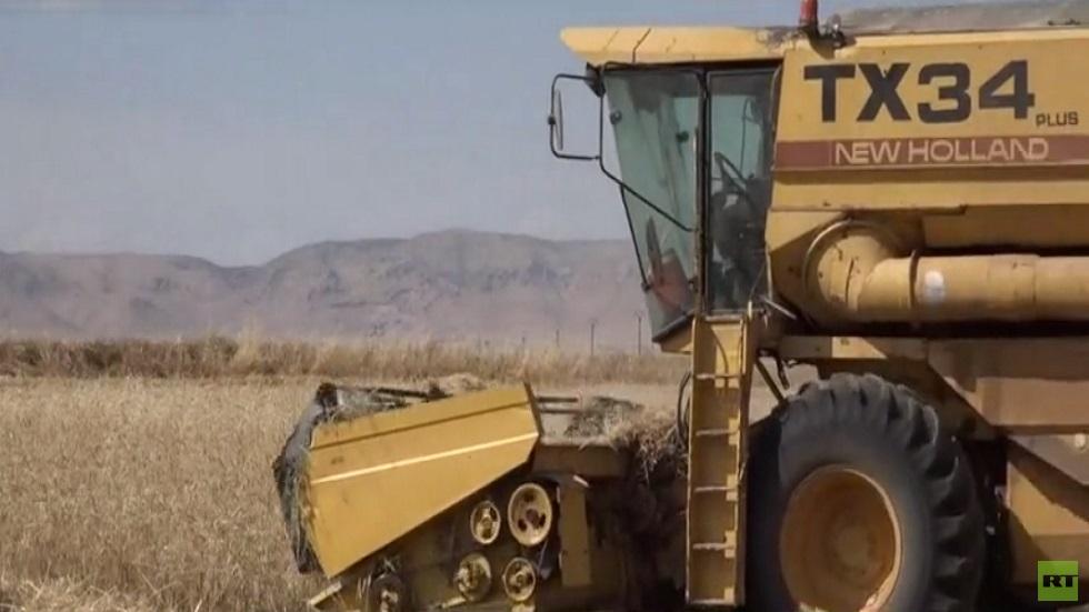 موسم حصاد القمح شمال شرق سوريا