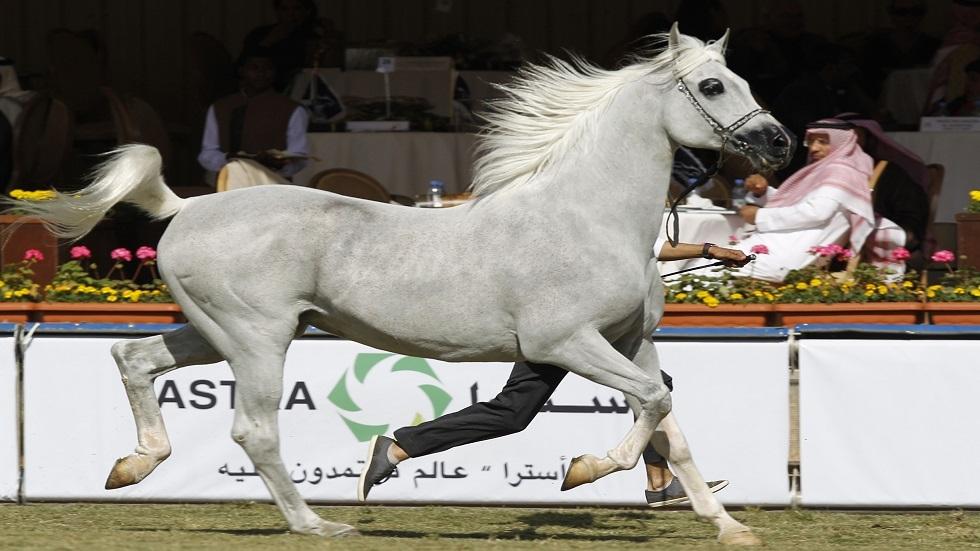 الخيول العربية - أرشيف
