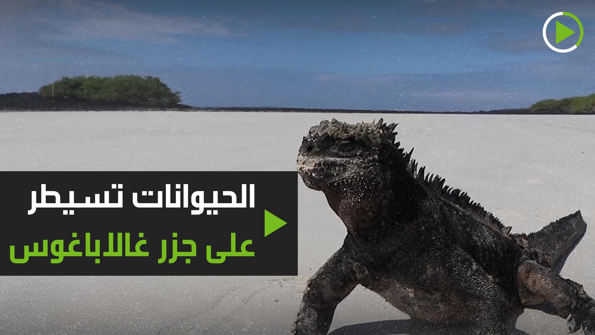الحيوانات تسيطر على جزر غالاباغوس