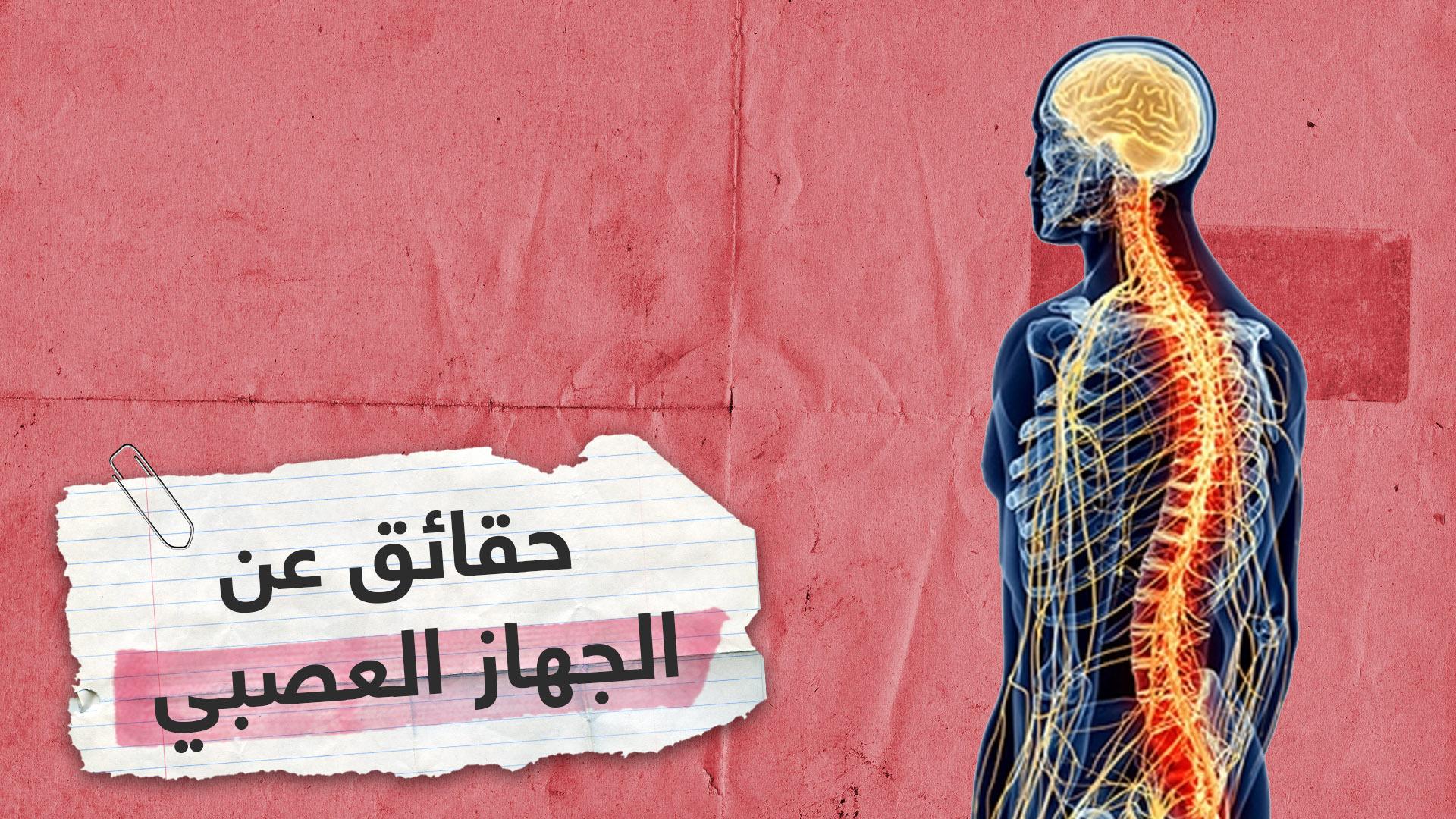 5 حقائق مهمة عن الجهاز العصبي للجسم