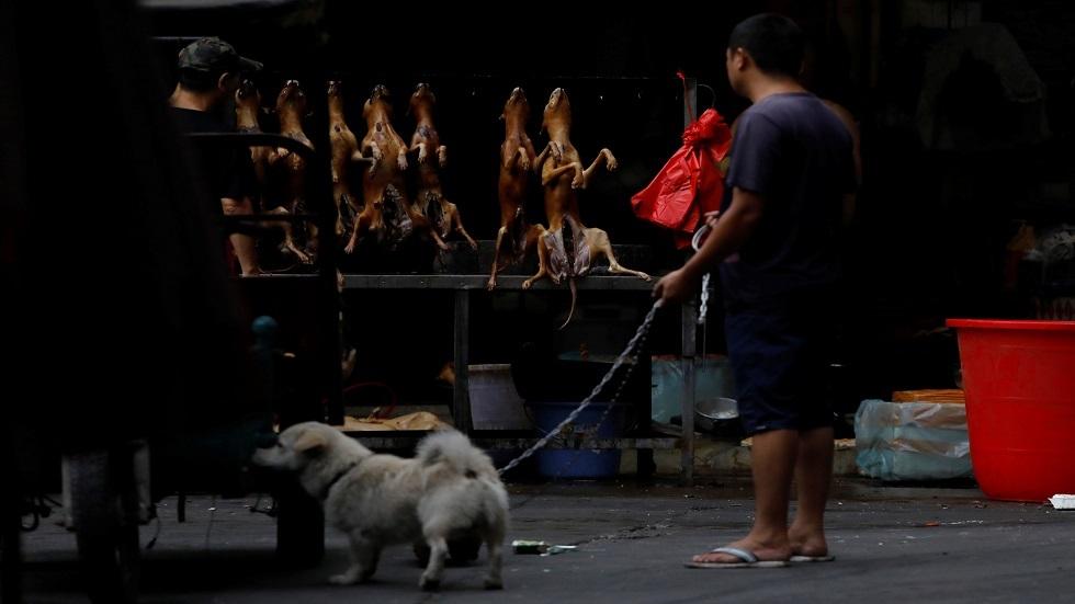 مهرجان لحم الكلاب في الصين