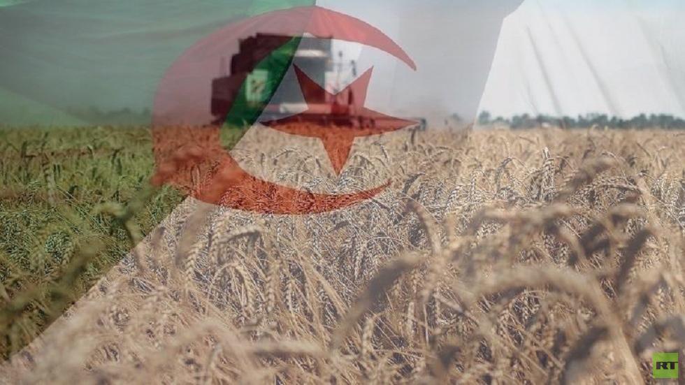 الجزائر تبدأ شراء قمح الطحين في مناقصة دولية