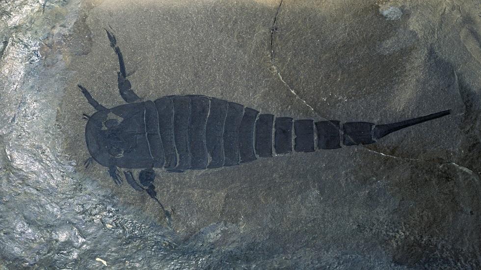 صورة تعبيرية لعقرب البحر