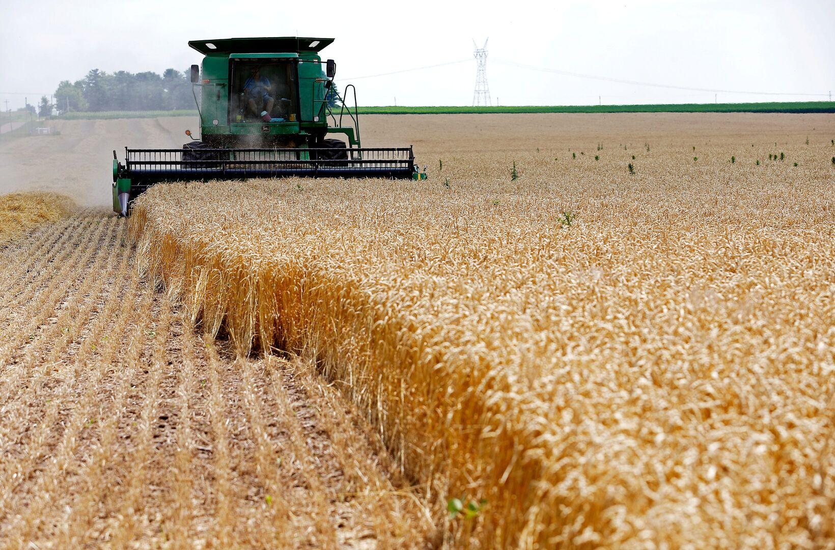 روسيا تطرح أفضل العروض في مناقصة مصرية لشراء القمح
