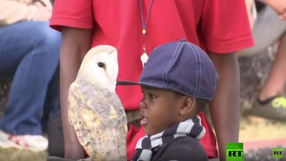 محمية طيور جارحة في زيمبابوي تصارع للبقاء
