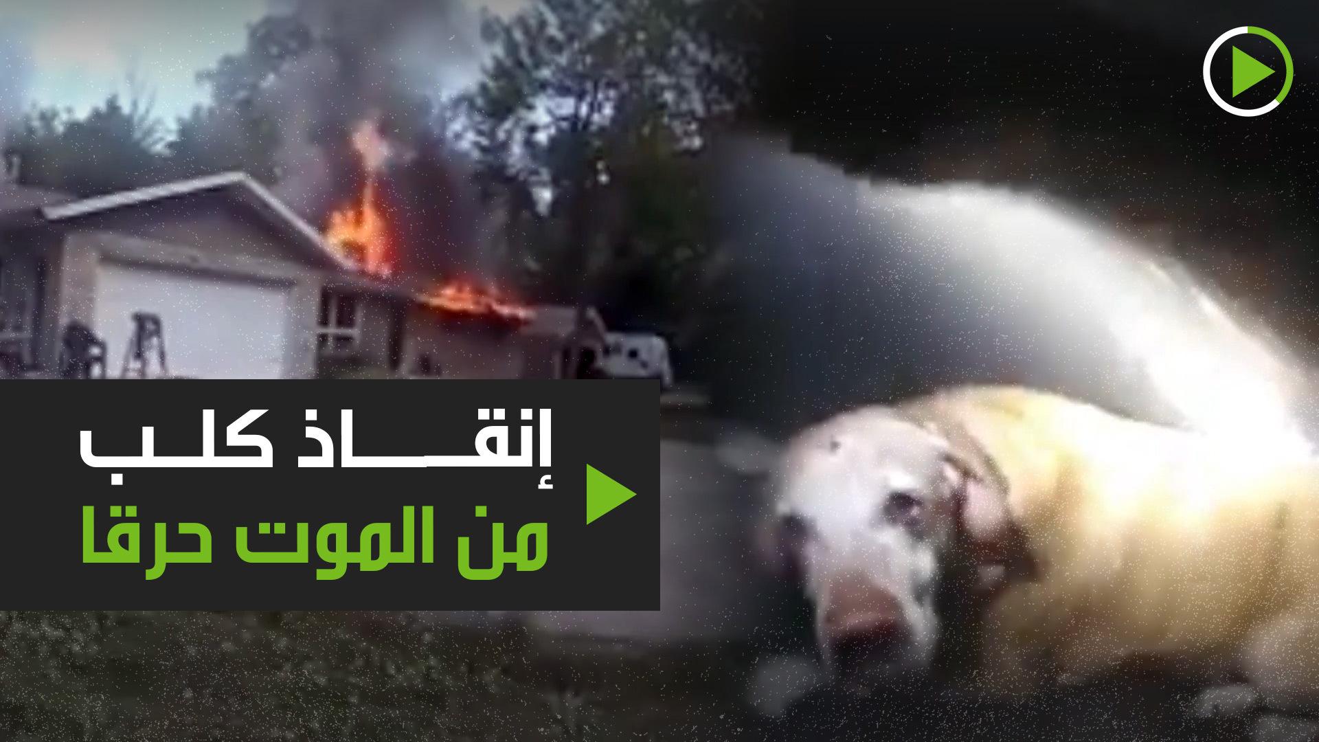 إنقاذ كلب من الموت حرقا