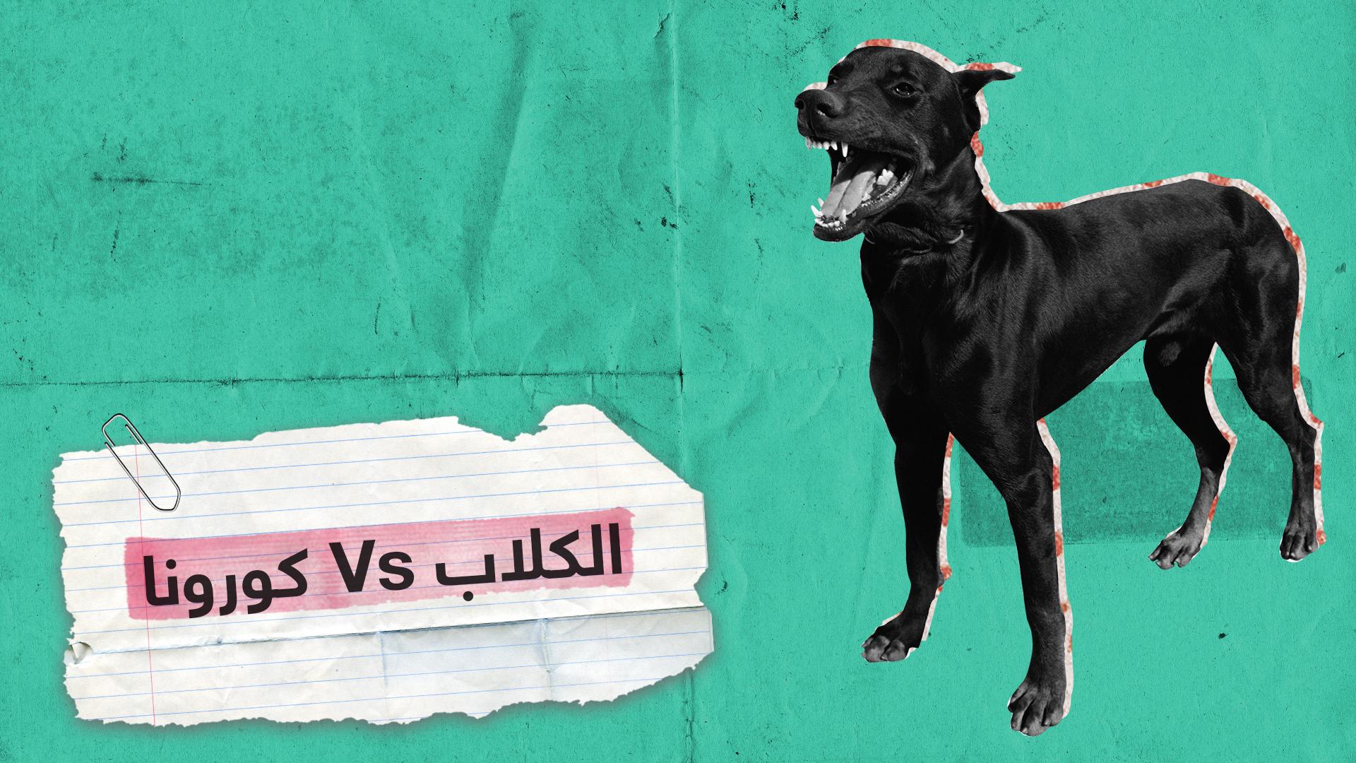 الكشف عن كورونا بمساعدة الكلاب البوليسية في الإمارات