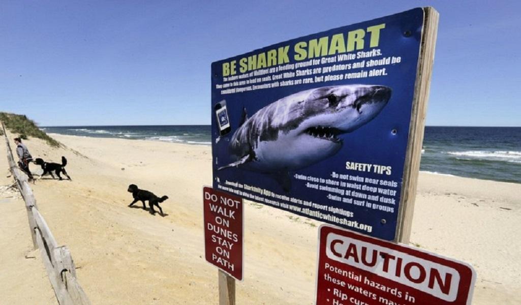 في ثاني هجوم فتاك خلال أسبوع.. سمكة قرش تقتل شابا قبالة سواحل أستراليا