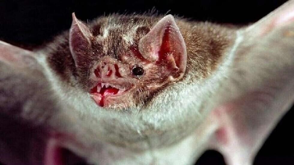 دراسة: الخفافيش تقدم مفتاح علاج