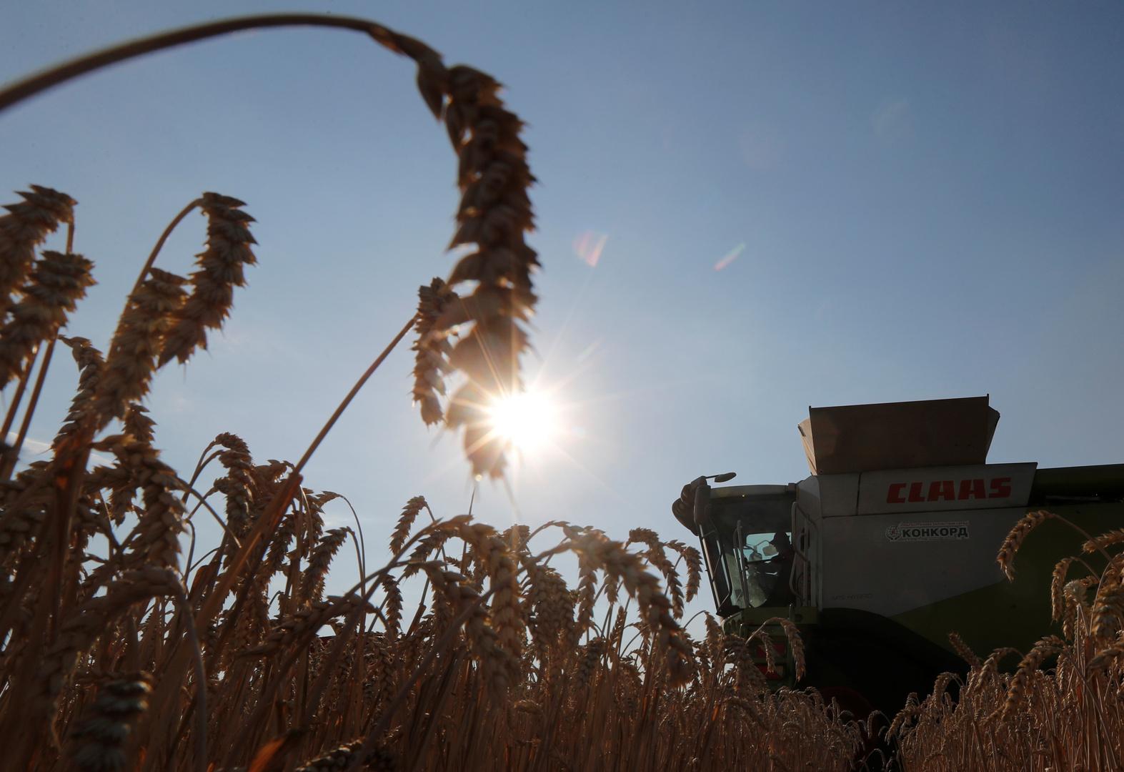 السعودية تشتري 725 ألف طن من الشعير