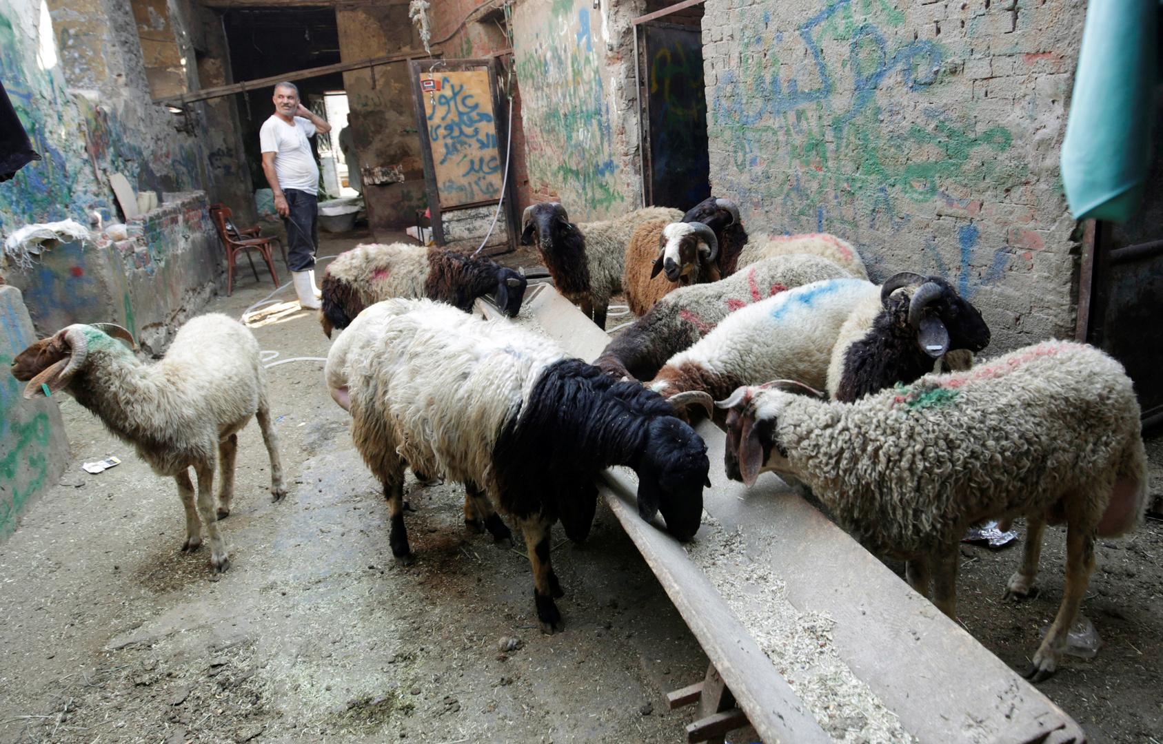 كيف تختار أضحية العيد بشكل سليم في زمن كورونا؟