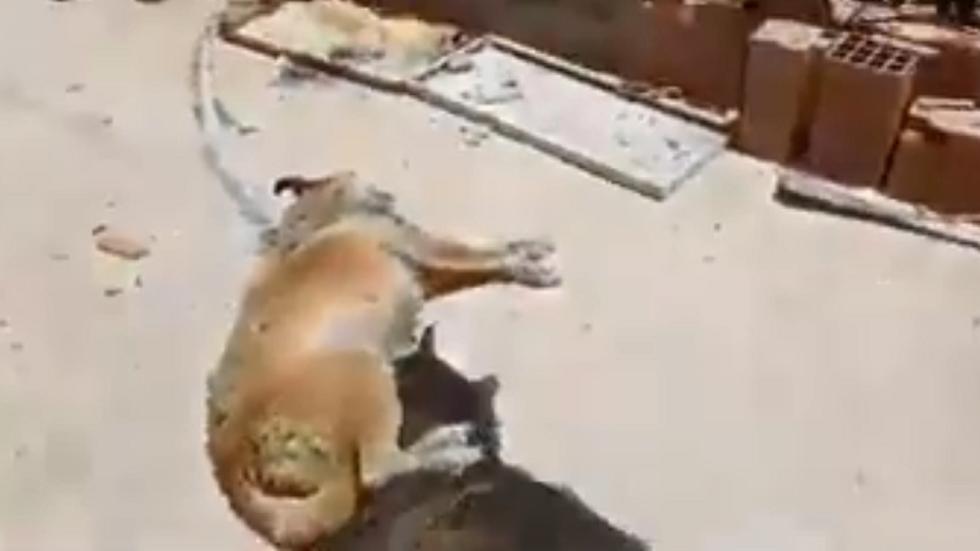 تونس.. قتل أكثر من 20 كلبا بوحشية في ملجأ للكلاب السائبة (فيديو)