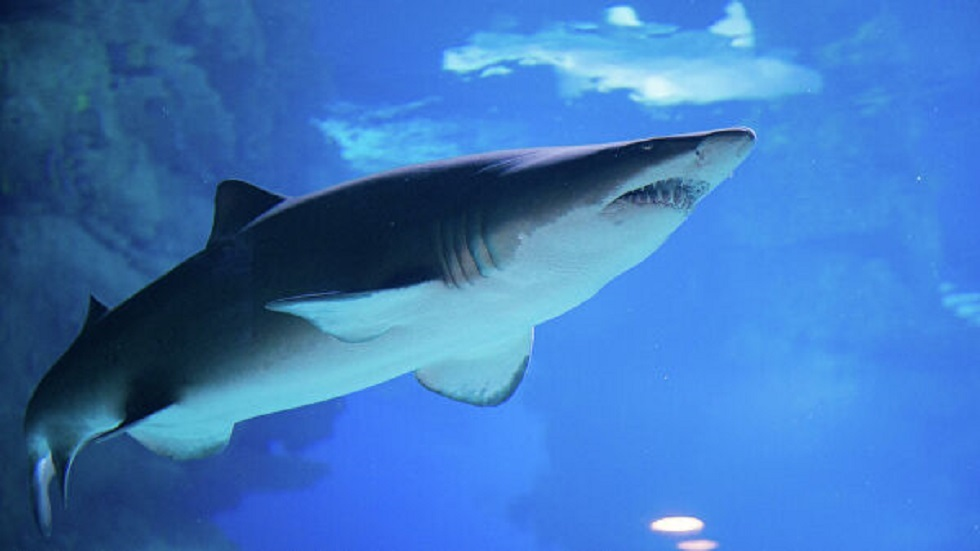 اكتشاف البلاستيك في أمعاء أسماك القرش