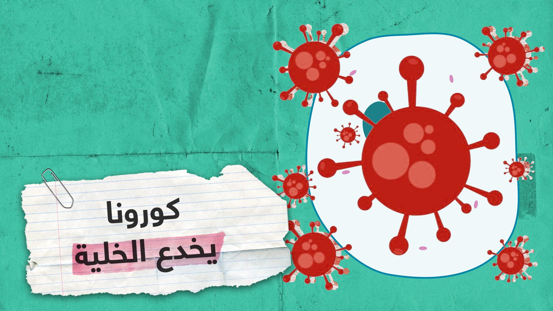 """دراسة هامة تكشف كيف """"يخدع"""" فيروس كورونا الخلية"""
