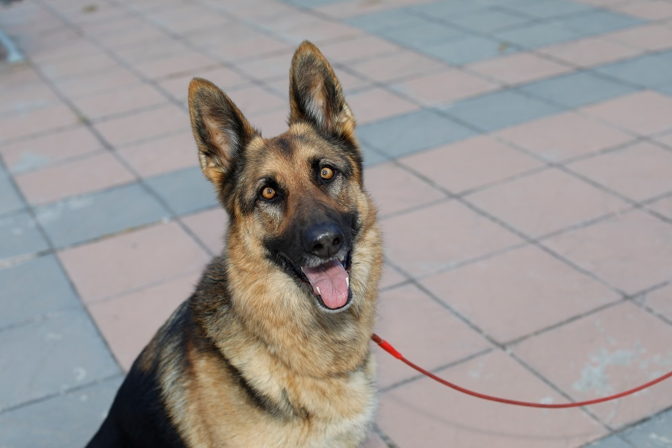 نفوق أول كلب أصيب بكورونا في الولايات المتحدة