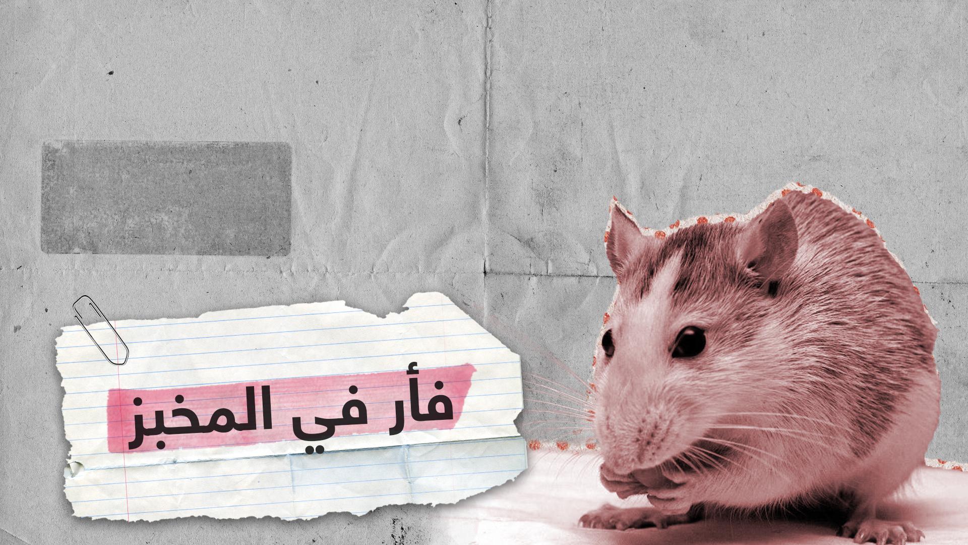 فأر في مخبز يثير غضب المواطنين بالأردن